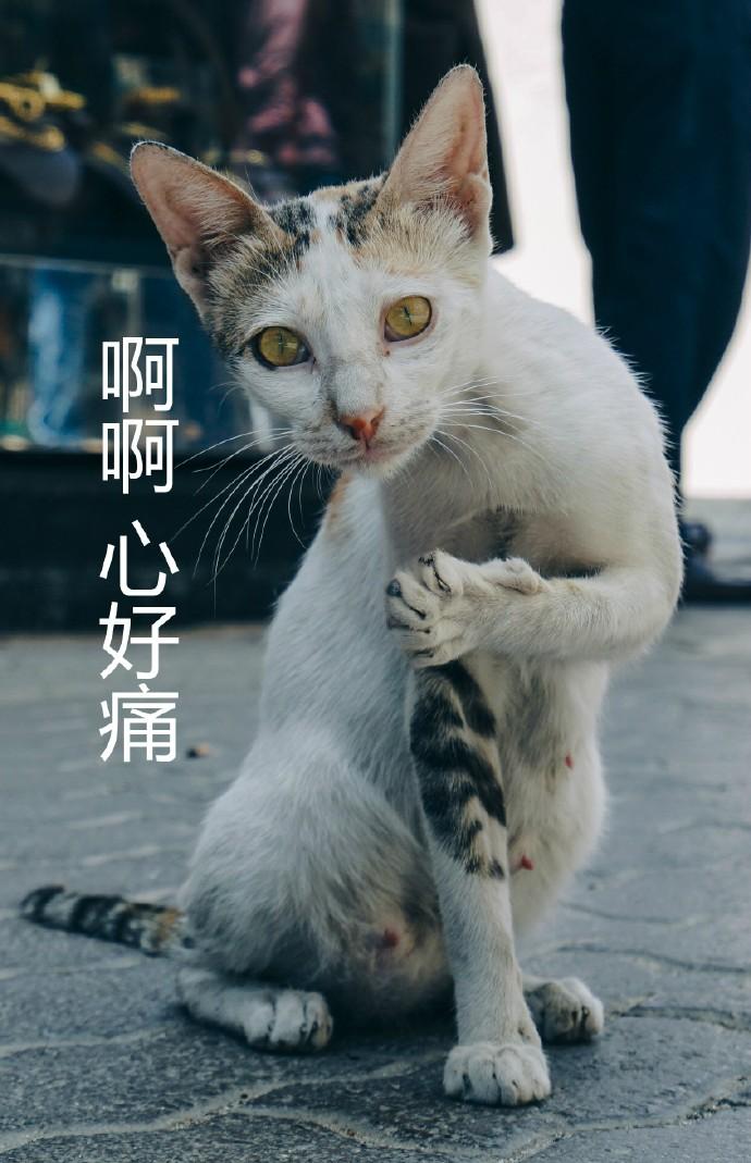 壁纸 动物 狗 狗狗 猫 猫咪 小猫 桌面 690_1069 竖版 竖屏 手机