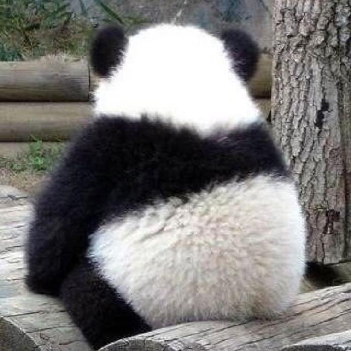 熊猫背影柯基臀 原来大家喜欢的部位都这么戳萌点