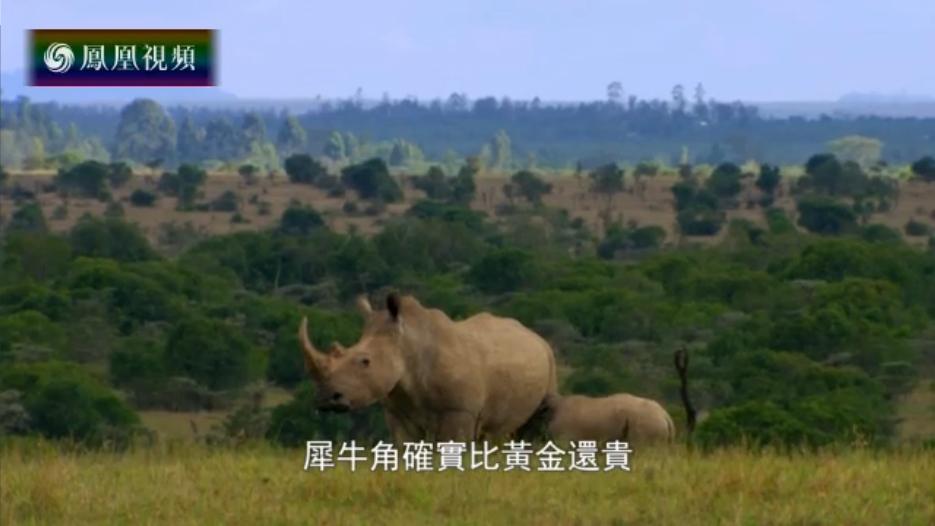 2016-06-06地球宣言 北白犀灭绝的教训