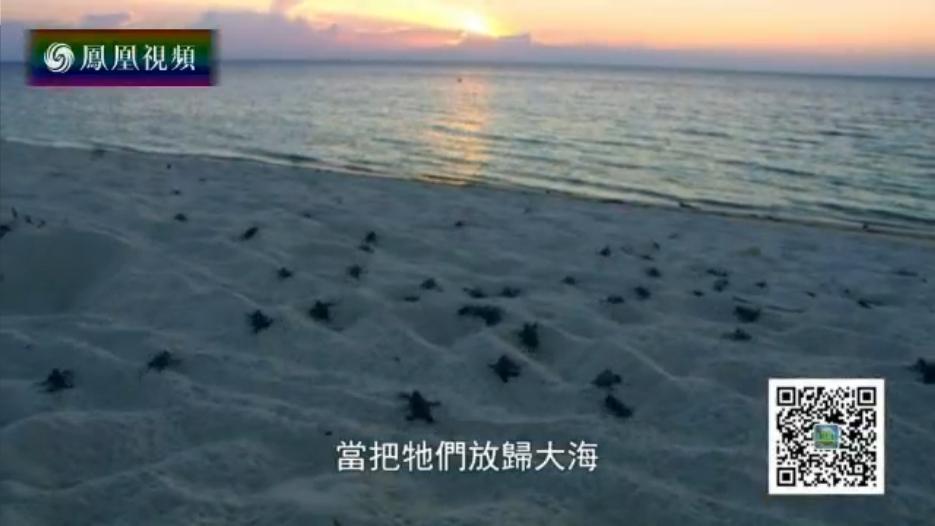 2016-06-08地球宣言 东南亚舍令岸岛海龟巢