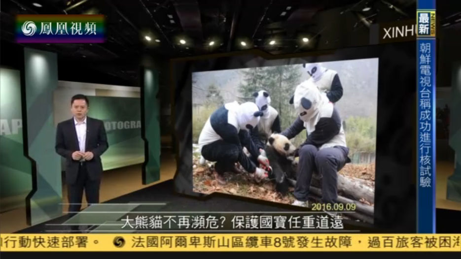 今日视点:大熊猫保护工作任重道远