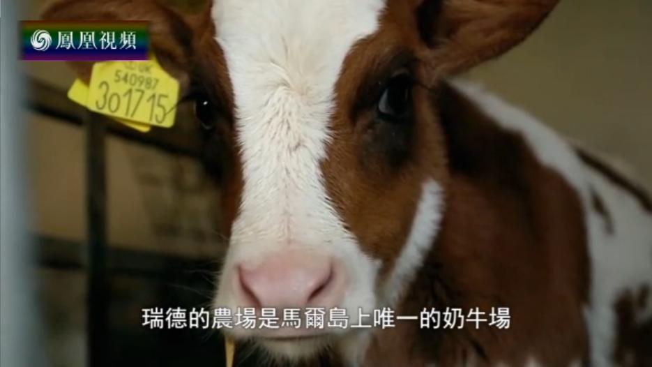 马尔岛上唯一的奶牛场