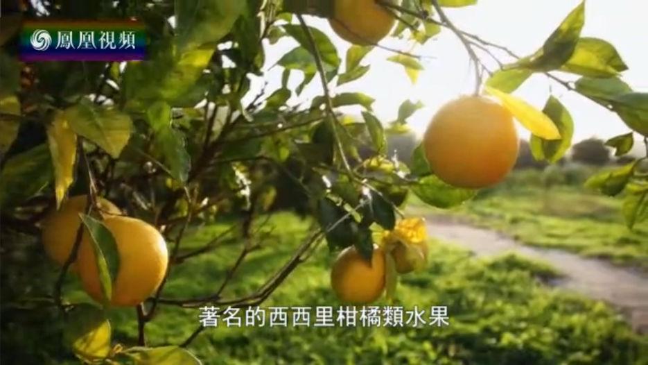 西西里柑橘类水果