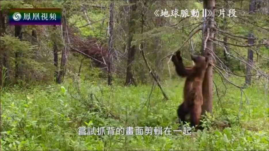 """棕熊为抓背跳出""""魔性舞蹈"""""""
