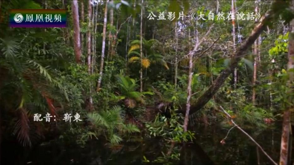 大自然在说话(三)