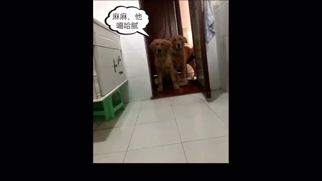 高清女厕所偷拍