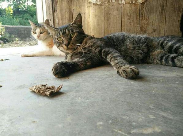 壁纸 动物 猫 猫咪 小猫 桌面 597_442