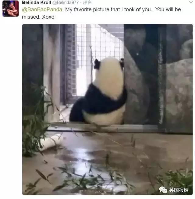 这个月21号,华盛顿国家公园就要归还大熊猫Bao Bao给咱们了。 萌宝Bao Bao要走,美国人表示他们现在的心情非常蓝瘦想哭。  Bao Bao出生于2013年的夏天,她的老爸老妈是旅美大熊猫添添和美香。 她的到来可把美国人高兴坏了,当时谁也没想到美香在生过两胎后(第二胎宝宝只存活了一周),还能给大家生下这么一个萌滚滚。  很多人觉得Bao Bao的出生就是一个奇迹,她也是出生就自带明星光环的一个girl。那天有好几万人在网上守着看直播,等待它的降临。  Bao Bao 这名字还是网友票选出
