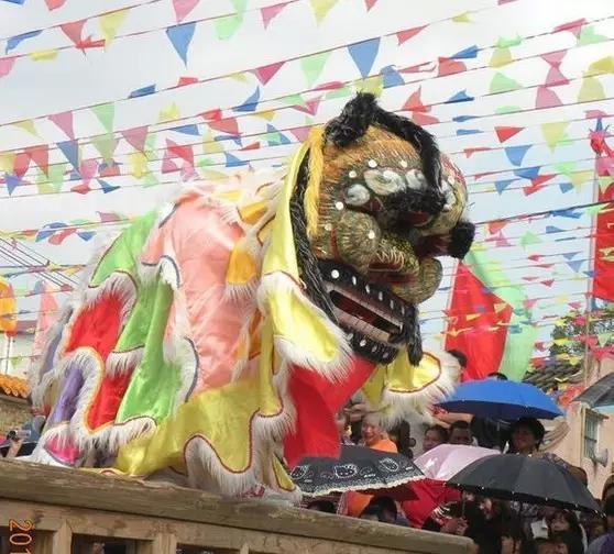 为何称为五福狮呢?这还得从表演角色说起。一般的麒麟狮,只有擎狮头和做狮尾两个人,表演起来场面略显单调。而五福狮的出场除了擎狮头外,还有一个扮演精绍和,一个扮演憨绍和以及两个扮演猴子,一共有五个角色。其表演多在春节期间,有五福临门之意。民间习俗认为是吉祥之狮 故称五福狮。