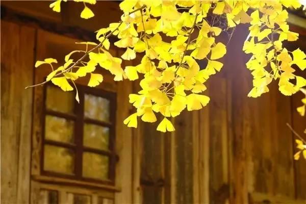 竹子护宅,香椿辟邪,植物风水你知多少? - 随缘易士 - 随缘易士金口诀