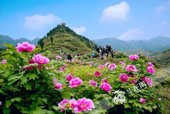 第十八届垫江牡丹节本月24日开幕上百人报名美食城电影院龙岩图片