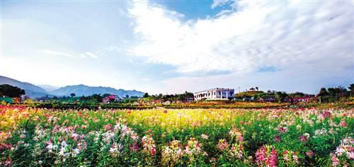 垫江牡丹节_3月24日,第18届垫江牡丹文化节将在\