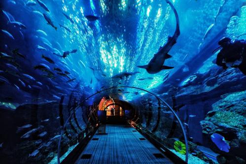 壁纸 海底 海底世界 海洋馆 水族馆 桌面 499_333