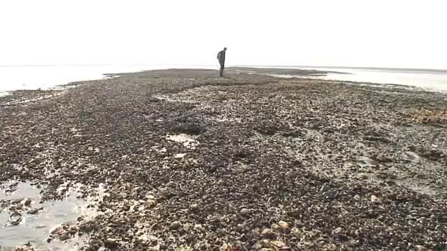 生蚝长满海岸 丹麦驻华大使馆官微紧急求助 - 天在上头 - 我的信息博客