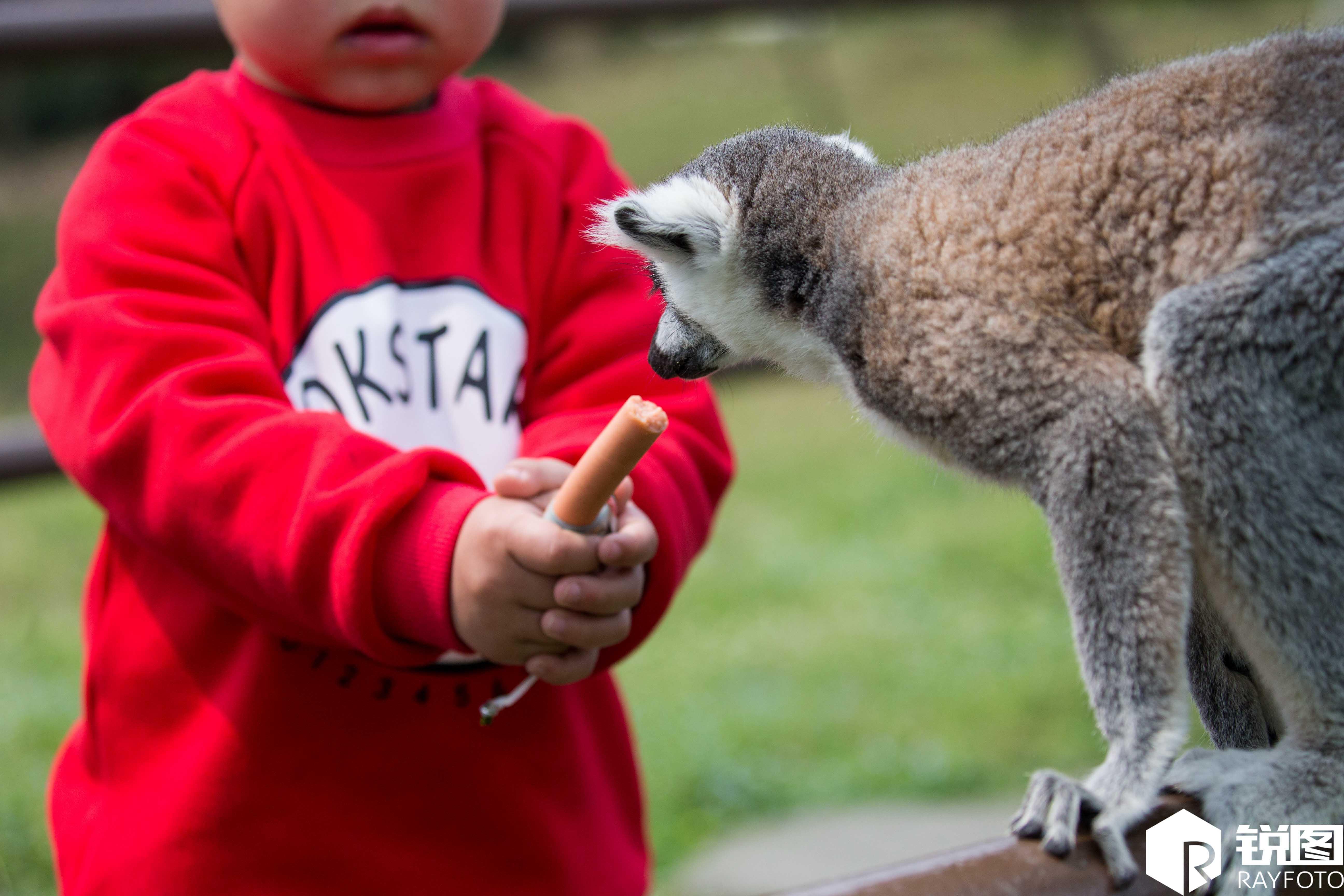 游客动物园里肆意喂食 猴子都快被喂成人精了