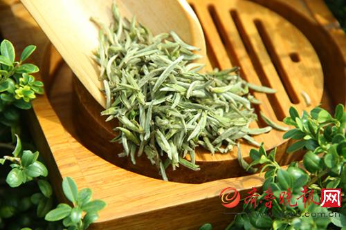白茶有哪些品种?白茶的作用与功效白茶的泡法