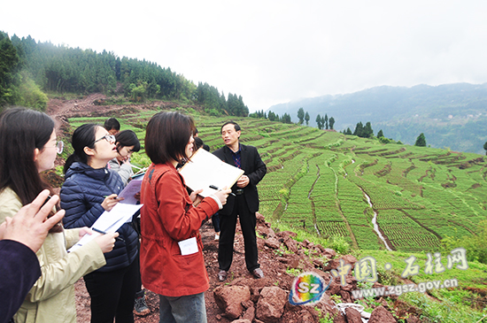重庆市各大媒体到石柱县采访产业扶贫