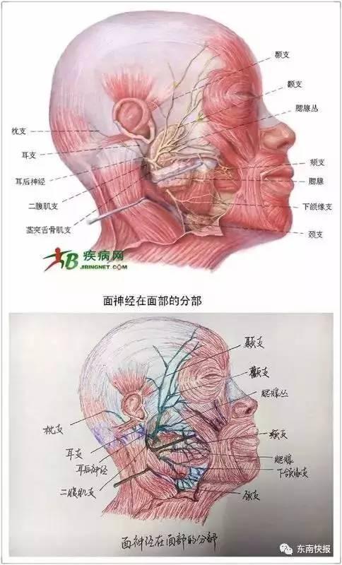 这美女厉害了!福州女大学生手绘人体解剖图太逼真!