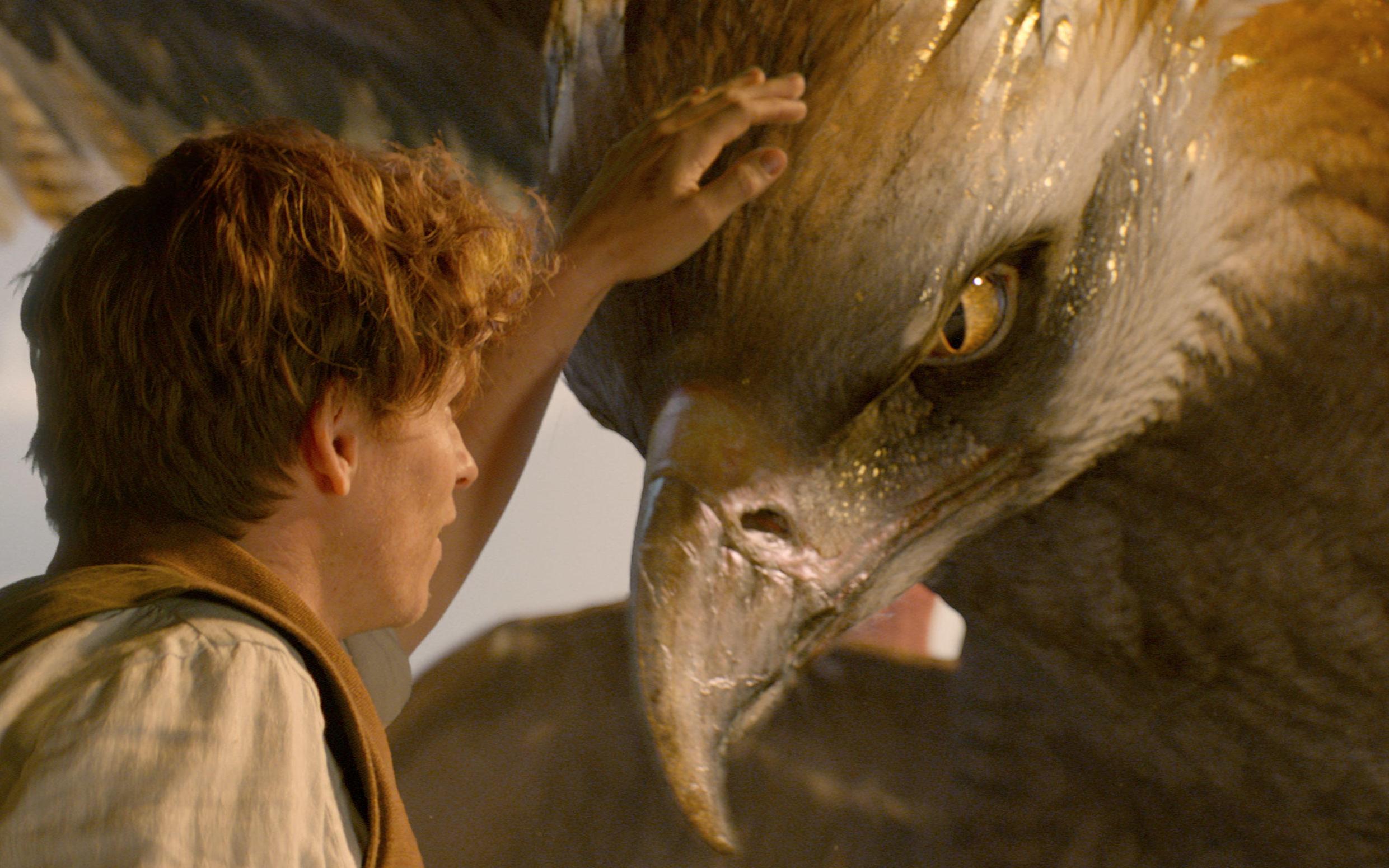 《神奇动物在哪里》主演埃迪雷德梅恩祝贺中国内地票房
