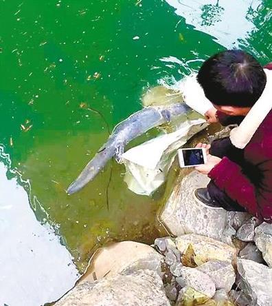 男子钓鱼发现不明物体 靠近一看竟是娃娃鱼