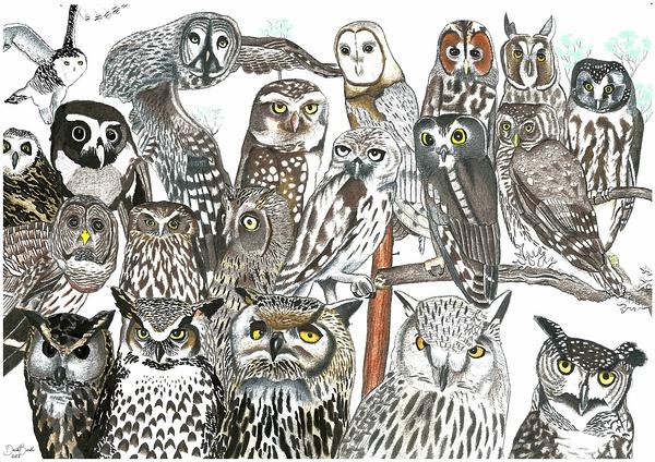3岁绘画自闭症天才少年,凭想象画出400多种动物,创造