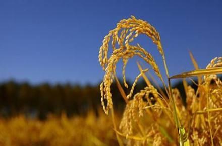 三农保险政策_什么是三农政策_三农保险指什么