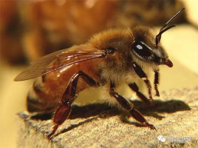 非洲性爱狠狠_强悍的非洲野蜂