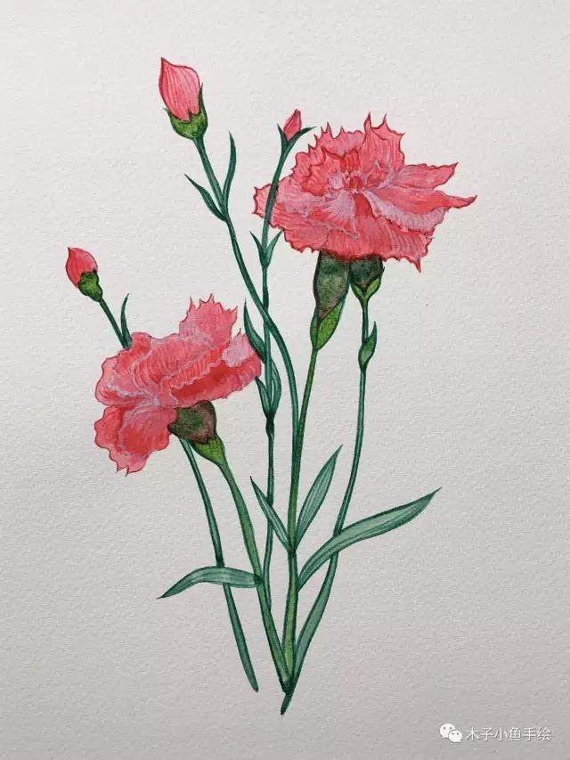 画康乃馨步骤|画一束花给母亲节