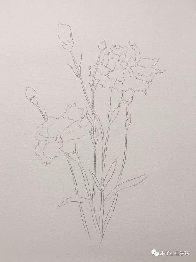 画康乃馨步骤|画一束花给母亲节_凤凰资讯