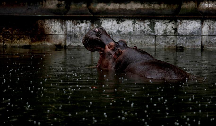 百年动物园改成公园后,遗留动物生活凄惨被关地下牢笼