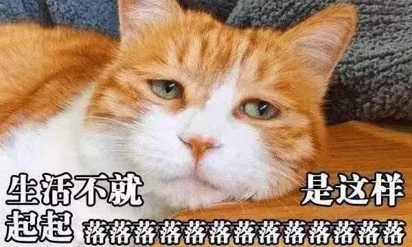 为什么猫会吃掉刚生下的小猫