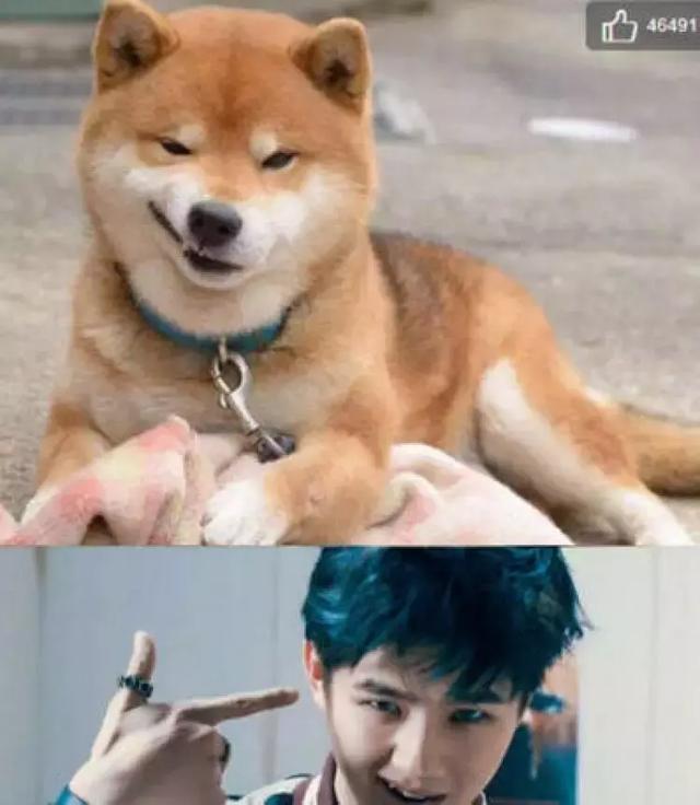 喵届李荣浩,狗届刘昊然,现在的明星们都流行和动物撞脸吗?