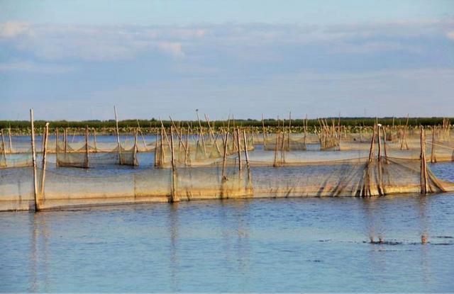 都知道查干湖冬捕很壮观,其实它的夏季也相当漂亮