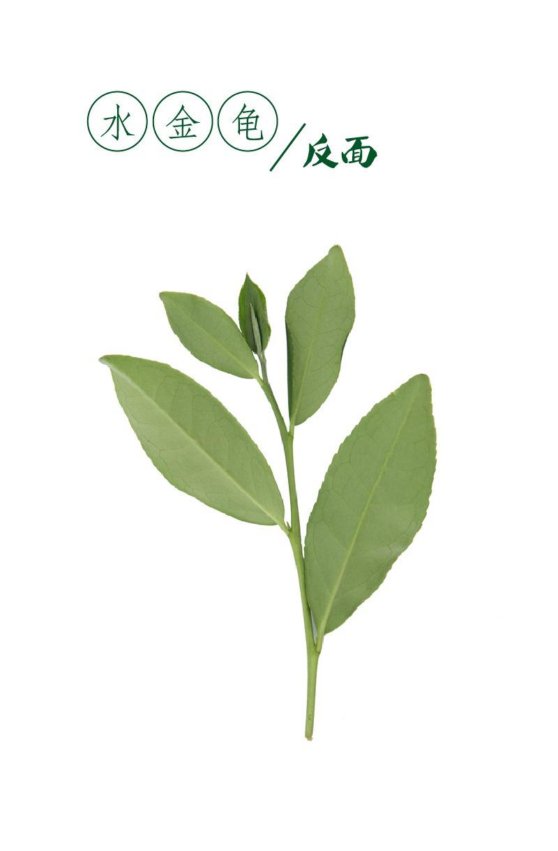 背景 壁纸 绿色 绿叶 树叶 植物 桌面 800_1220 竖版 竖屏 手机