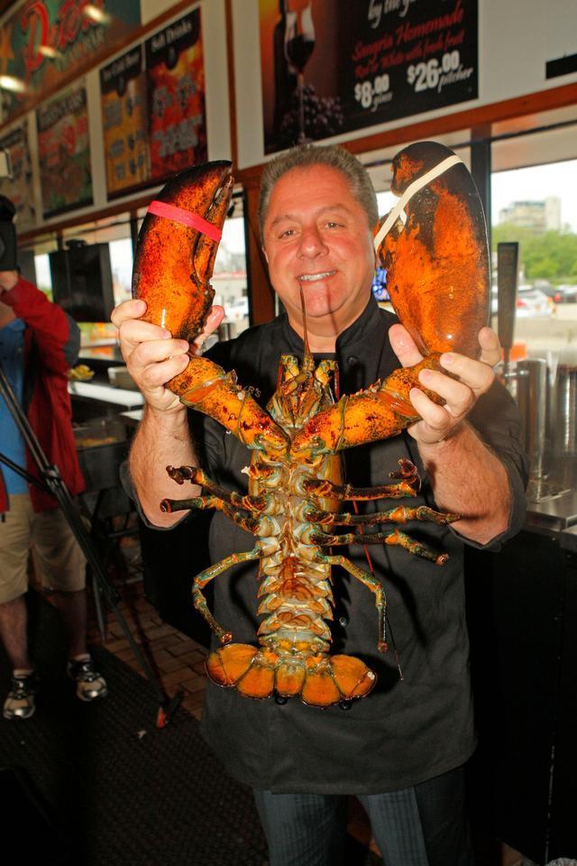 在水族箱里生活20年的132岁老龙虾,被主人放回大海_凤凰资讯