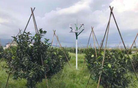 """""""世界500强""""IT精英成功转型农业,带领广西首批智慧农业落地"""