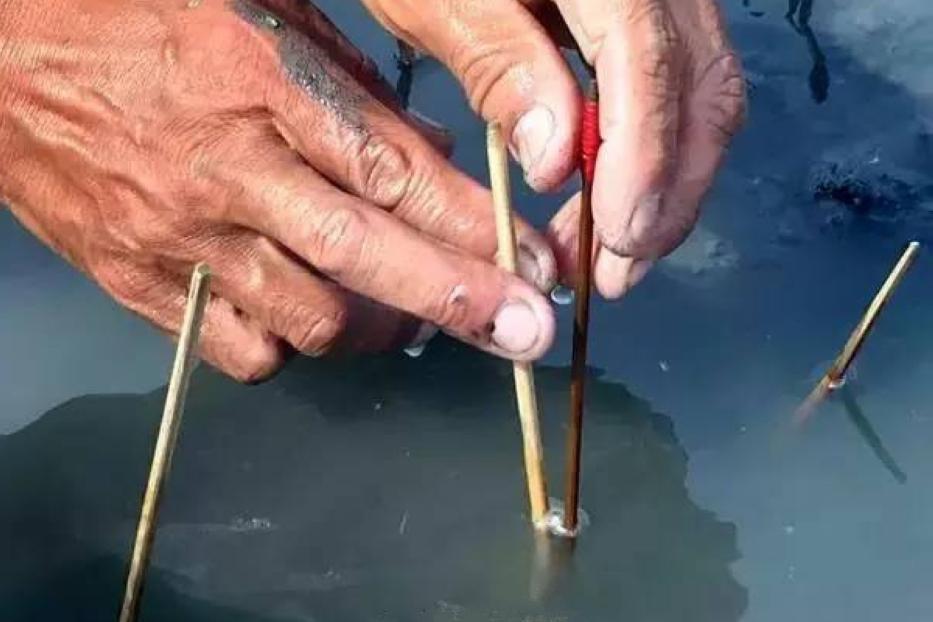 老人海边手握毛笔不写字,钓出这东西一斤能卖60元