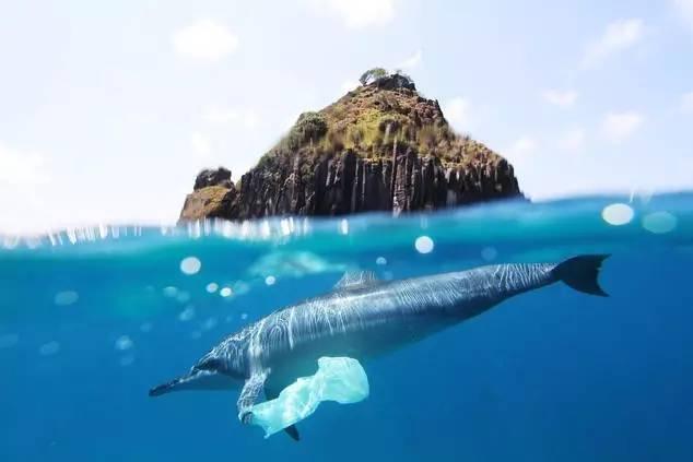 甚至在海底的微生物体内也发现了塑料垃圾的成分, 上百万只海鸟, 10万