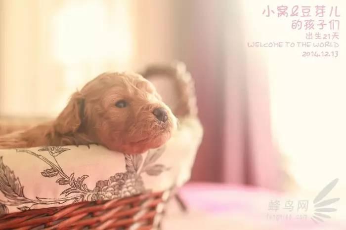 萌宠猪猪 睡觉 可爱