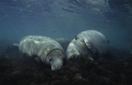 海洋动物怎么睡觉呢 真是奇妙