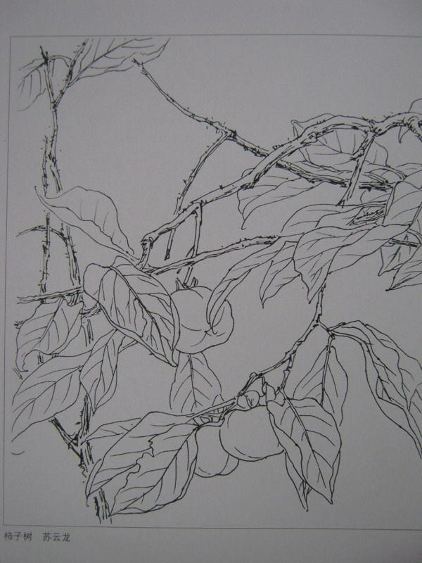 植物花卉写生白描的方法及步骤 花卉素描写生步骤图