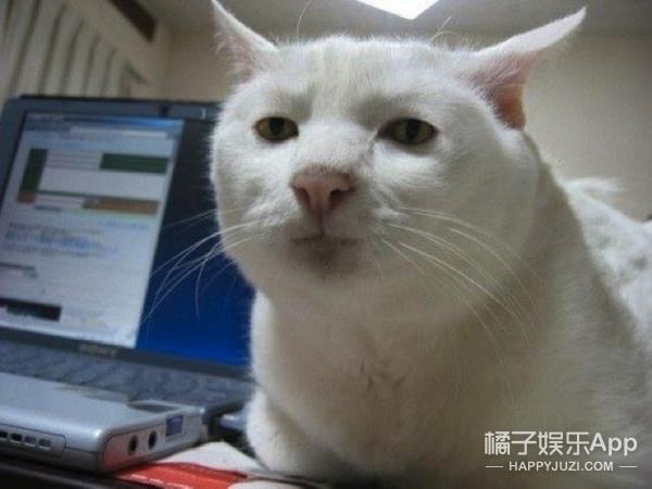 壁纸 动物 狗 狗狗 猫 猫咪 小猫 桌面 600_450