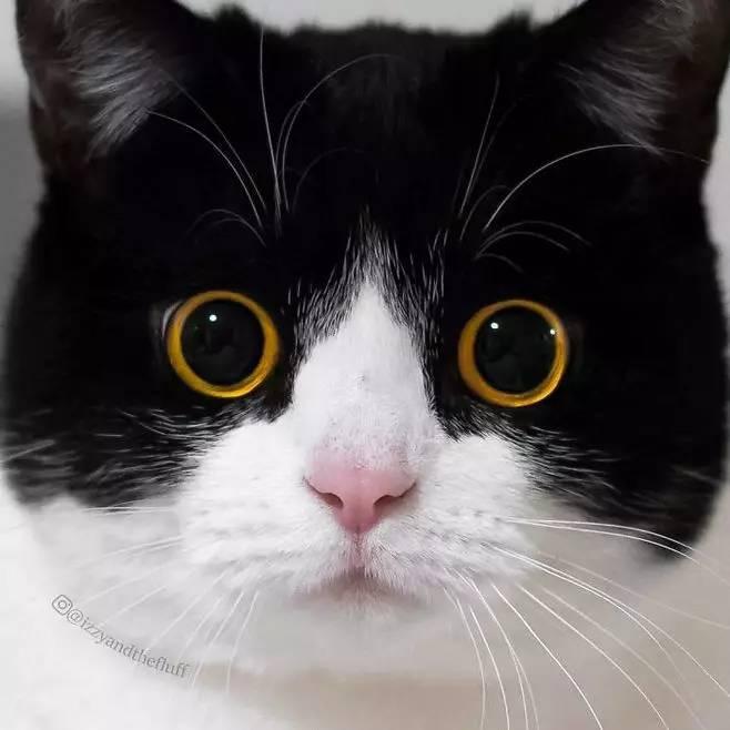 盯 我觉得吧 这...看久了 有一种被吸进去的魔力 (点击图片进入花瓣小程序 查看更多哦) 当前浏览器不支持播放音乐或语音,请在微信或其他浏览器中播放 StrayCat-FEARLESS 对于猫咪,一般人的印象就是你们这群愚蠢的人类把朕的猫粮端上来本女王不稀罕搭理你猫咪不像狗狗那样,所有的情绪都表现在那双闪闪的眼睛里,总是会让人猜不透。可是这只网红猫就不一样了!简直萌出新纪元!圆滚滚的大眼睛,似乎随时随地在跟你说着什么故事,可爱到可以拿来当表情包了,不过不知