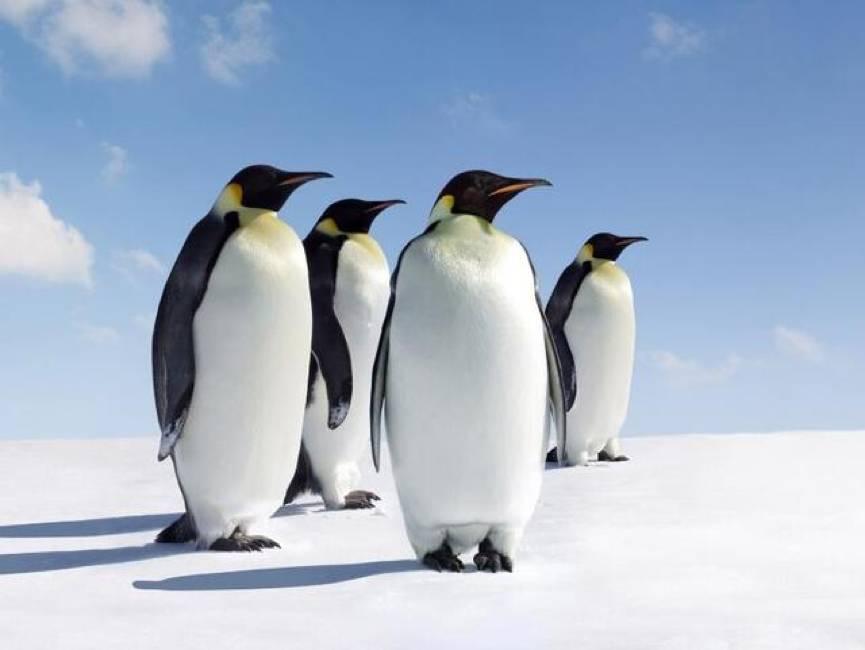 """【百姓看司改】""""老赖""""曾经跑到南极回不来……现在把钱藏到支付宝、微信红包就能""""瞒天过海""""?"""