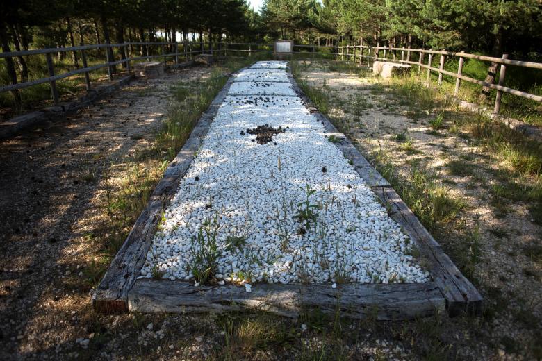 西班牙墓穴惊现大量自然保存人类大脑