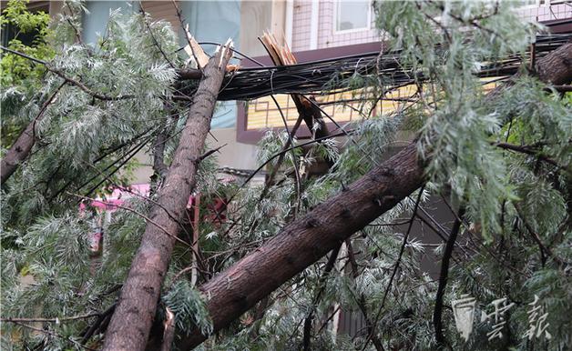 昆明暴雨袭城 园林绿化以及电力部门组织抢修人员
