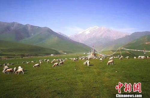 资料图:七月的祁连山下。 郎文瑞摄