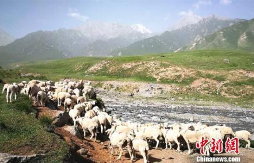 资料图:夏日的祁连山风景如画。 郎文瑞摄