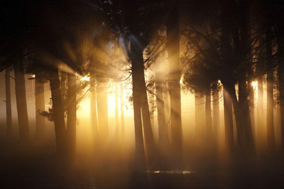 林间漫步:看看世界各地的奇特树木
