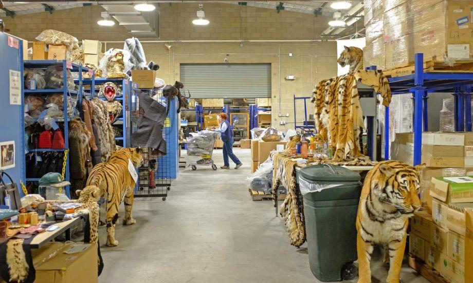"""这里是""""野生动物的地狱"""" 拥有百万件动物制品"""